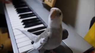 Česko Slovensko má talentovaného papouška