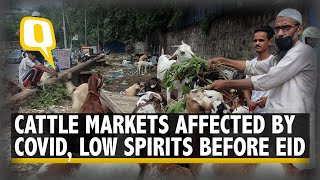 Goat Markets Suffer Before Eid-Ul-Adha Because of COVID-19 | The Quint - Download this Video in MP3, M4A, WEBM, MP4, 3GP