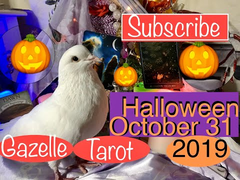 Halloween 🎃DailyTarot Reading 'Surrender To New Beginnings #tarot #halloween #fun