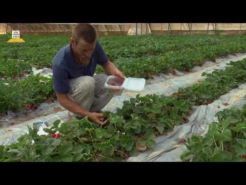 מאמינים בחקלאות ישראלית לרגל 70 שנה למדינה