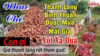 Nhạc Chế   Thanh Long Bình Thuận Được Mùa Mất Giá   Nông Dân Điêu Đứng