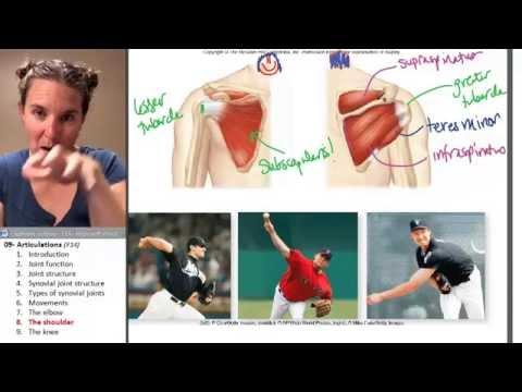 Le régime à la douleur dans les articulations et les muscles
