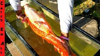 Caught RARE RED DRAGON FISH in Neighborhood Pond!
