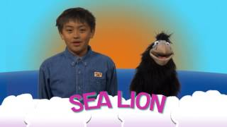 In My Family   Sea Lion