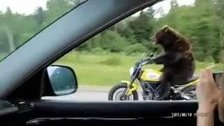 Медведь на мотоцикле 🤣🤣🤣🤣🤣🤣🤣🤣 приколы 2018-2019