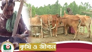 Krishi O Jibon | Rural Dairy Farming | Agriculture Development Program