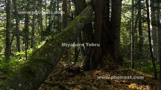 秋の針広混交林