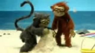 maimuni ucha