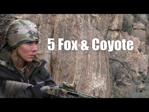 5 lišek & kojot