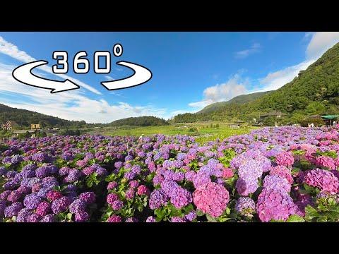 Vibrancy of Taiwan