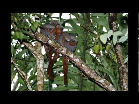 ONG descobre 381 novas espécies de plantas e animais na Amazônia