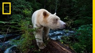 National Geographic Live! - Capturing the Spirit Bear | Nat Geo Live