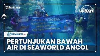 TRIBUN TRAVEL UPDATE: Libur Paskah, Melihat Pertunjukan Rabbit Underwater di Sea World Ancol