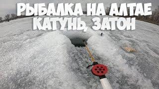 Рыбалка зимой в алтайском крае