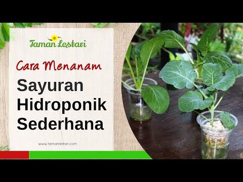 Video Cara Menanam Sayuran Hidroponik Sederhana