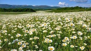 Мне хочется в чистое поле...