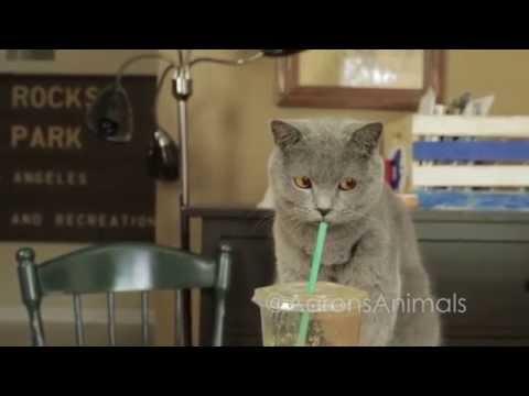Pet Peeves  - Aarons Animals