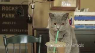 Pet Peeves  - Aarons Animals - Video Youtube