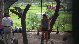 Feeding the Lemurs at the Dade City Giraffe Ranch