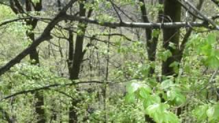 21 Mar 2009 ... Wojciech Kilar - Polonez (wersja godzinna) - Duration: 1:00:43. mlaud8 34,350 nviews · 1:00:43. W. Kilar: Kochajmy się (z filmu Pan Tadeusz)...