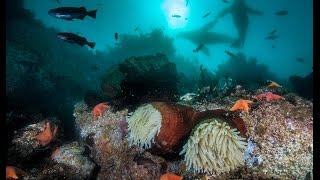 Scuba Diving in Monterey Bay, California