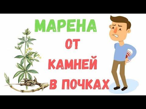 Марена красильная: свойства, польза и лечебное применение - fito.ua