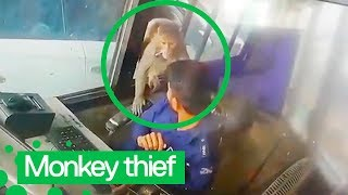 Cheeky Monkey Steals Money from Toll Booth Worker