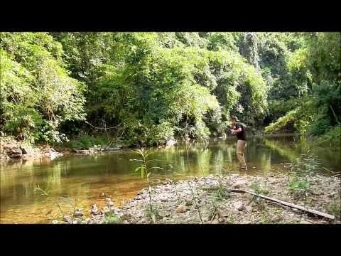 Mahseer fly fishing in Thailand