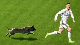 20 EPIC MOMENTS WITH ANIMALS ON THE FOOTBALL PITCH