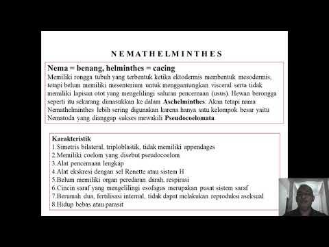 Strongyloidosis életciklus