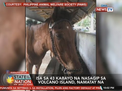 [GMA]  SONA: Isa sa 43 kabayo na nasagip sa Volcano island, namatay na