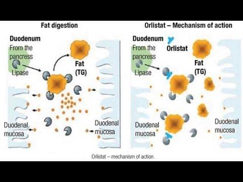 Quali prodotti escludere da una dieta per perdere il peso