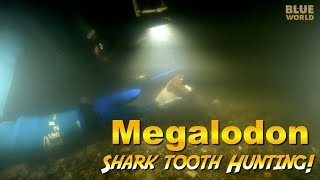 Megalodon Shark Tooth Diving!   JONATHAN BIRD'S BLUE WORLD