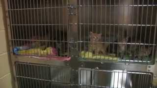 CT Humane Society- Westport Shelter