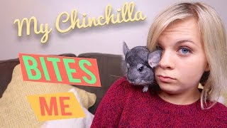 😢 HE BITES ME! -  20 FACTS ABOUT MY CHINCHILLA! 🐭