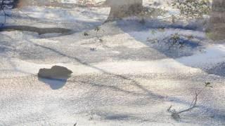 Video del alojamiento Labetxea