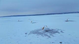 Ловля берша зимой на поставушки