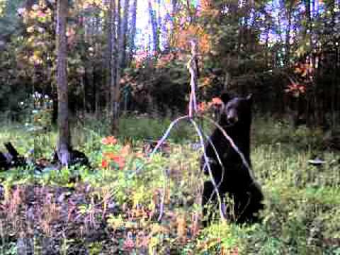 Bear Juice from Buck Fever Synthetics LLC.