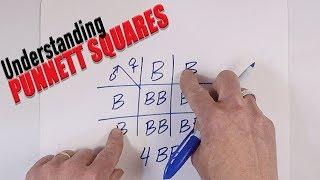 Understanding Punnett Squares