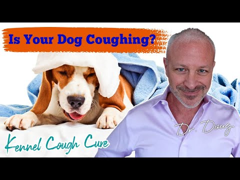 Video How to Treat Kennel Cough