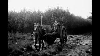 De bosschen en vennen van Oisterwijk 1917