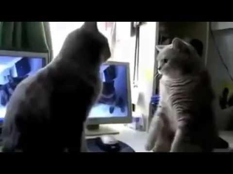 2 Katzen spielen