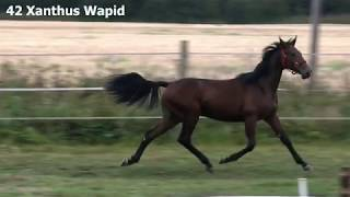 42 Xanthus Wapid