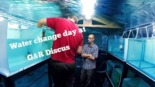 G&R Discus UK Clips of Water change day!!!