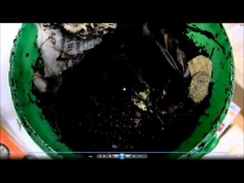 Aus dem Organismus der Parasiten vom Knoblauch hinauszuwerfen