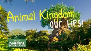 Tips For  Disney's Animal Kingdom 2018
