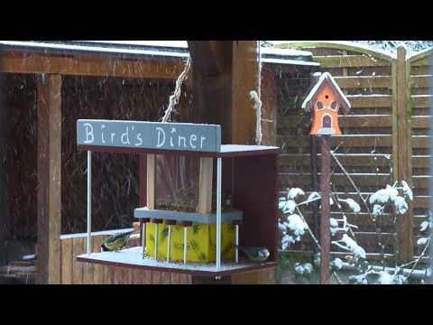 Birds Diner -  Die Vogelbar - Vogel auf dem Barhocker