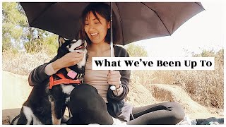 What We've Been Up To   WahlieTV EP756