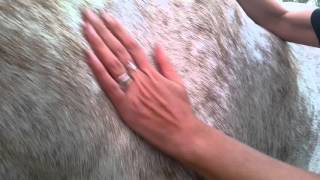 How to tell if your horse is dehydrated