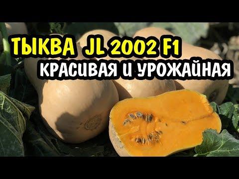 Тыква JL 2002 F1. Высокое содержание сахаров, оранжевый цвет, прекрасный вкус и аромат
